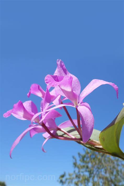 imagenes rosas gratis para descargar fotos de flores y rosas para fondo de pantalla del celular