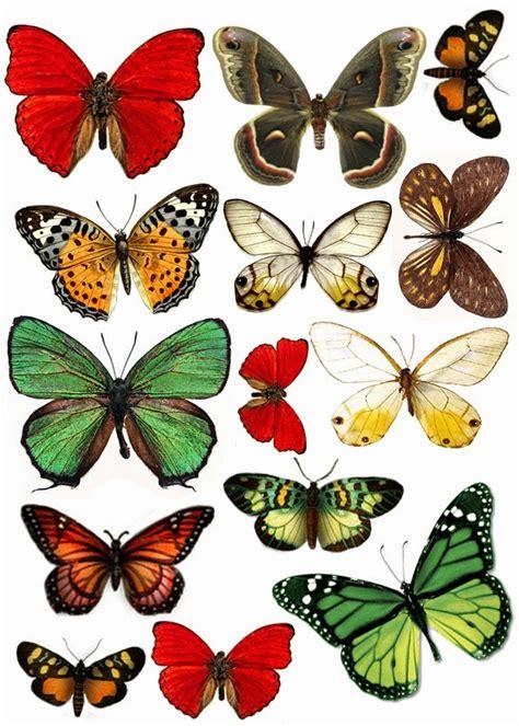 imagenes de mariposas reales para imprimir imprimolandia mariposas para imprimir