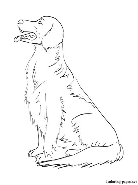 golden retriever coloring page coloring pages