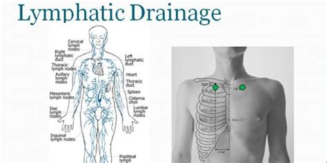 Detox Lymphatic Drainage by Lymphatic Drainage What Is It And Is It For Me