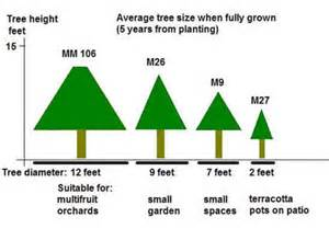 Tree Canopy Size Chart by Growing Fruit Trees Hints And Tips Realenglishfruit
