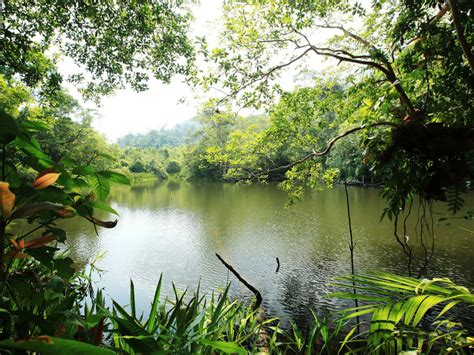 trophic landscape jungle river lake water rain forest lush