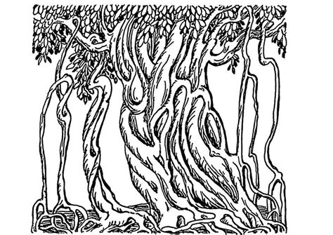 coloring pages of banyan tree coloring page banyan tree img 13709
