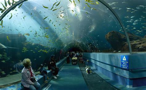 Interior Designer San Francisco Ca What S Working Today In Aquarium Theming