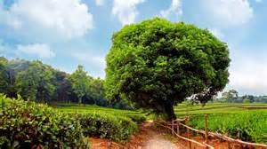 تصاویر فوق العاده زیبا از طبیعت سبز با کیفیت hd فان