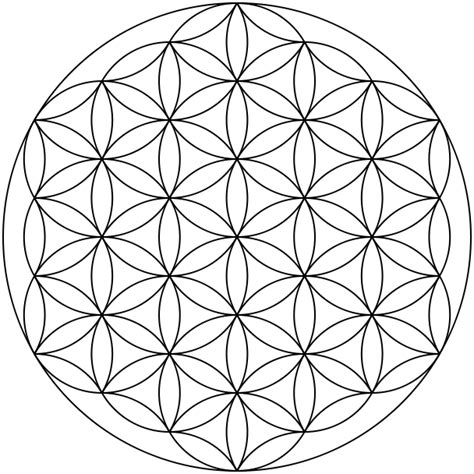 flower of life pattern in nature flower of life spirit science