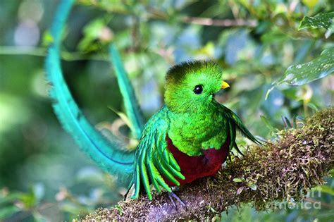 Southern Home Decor Blogs by Beautiful Quetzal 5 Photograph By Heiko Koehrer Wagner
