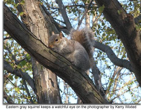 how to hunt squirrels in your backyard how to hunt squirrels in your backyard outdoor goods