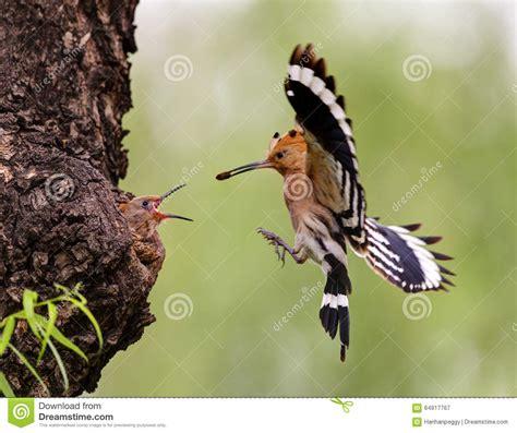 alimentazione uccelli uccelli d alimentazione immagine stock immagine di fauna