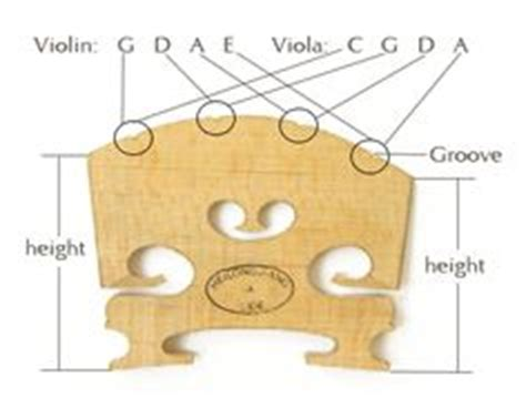 1000 images about violin anatomy on pinterest violin