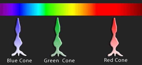 color cones s 竕 0 can dogs see colors probably one of the most