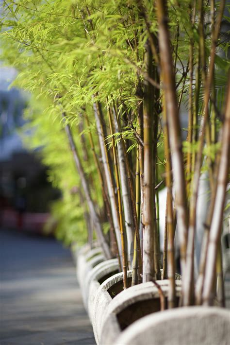 the best flowers aren t always the biggest serenity top 28 what to plant bamboo in bamboo plants online