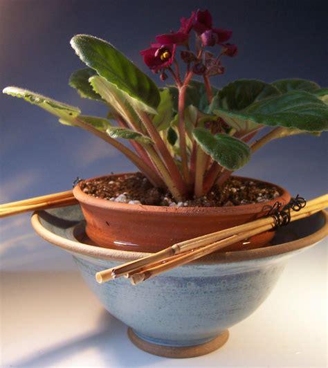 Violet Planter by Slate Blue Self Watering Violet Pot