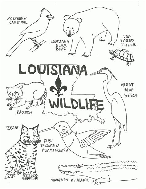 coloring page of louisiana state tree louisiana state tree coloring page coloring home