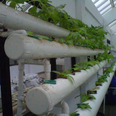 Sekam Bakar Untuk Akuaponik berkebun hidroponik pakde azmi