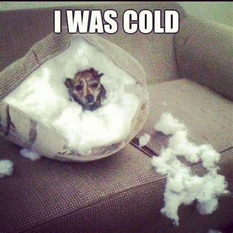 puppy cold 10 best images about dogs memes on lol steve and cats
