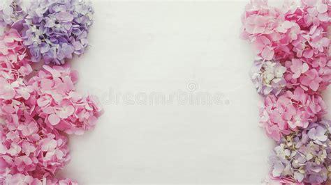 abbeville floral wallpaper pink natural vintage fresh hydrangea floral background stock image