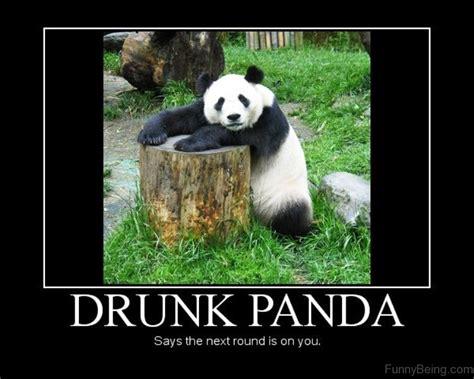 Drunk Panda Meme - 80 cute panda memes