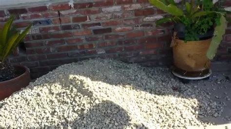 replaced lawn with landscape gravel pt 1