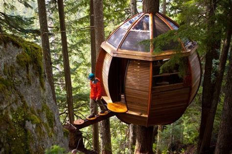 10 creative tree house ideas taylor homes houses bizarrely positioned 1