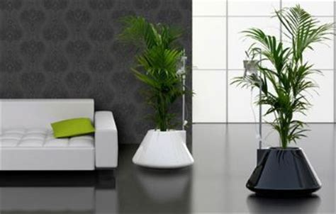Home Decor Blog Names How To Use Plants In Home Decor Comfree Blogcomfree Blog