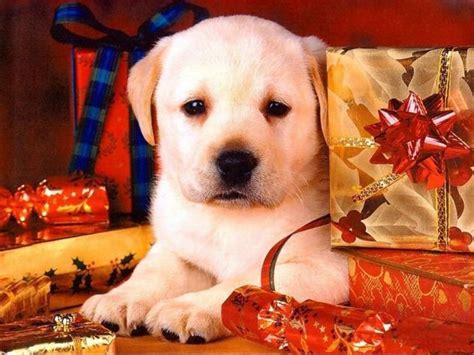 imagenes de animales navidad blog r 237 e que te r 237 e sin parar chistes adivinanzas y