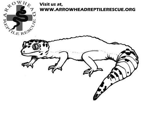 gecko face coloring page coloring pages