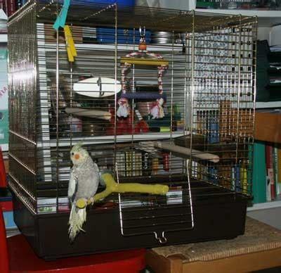 gabbie calopsite offerta uccelli vendo gabbia per calopsiti va