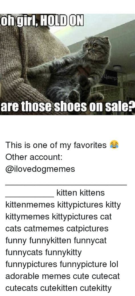 Meme Shoes For Sale - 25 best memes about cats funny kitties and meme cats
