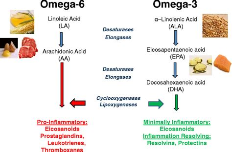 omega 3 e 6 alimenti dietary sources and general metabolic pathway for omega 6