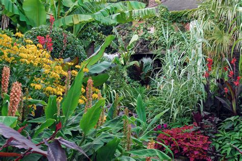 exotic gardening an exotic garden in a british climate daily globe