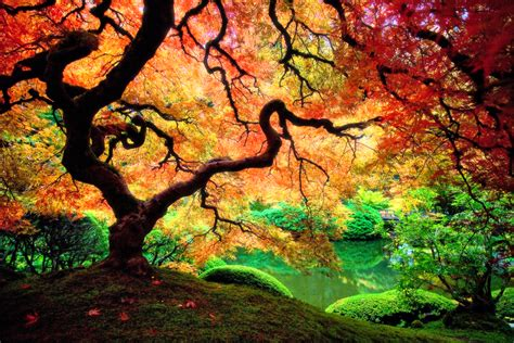 colorful tree psychedelic art elevated hustle 8