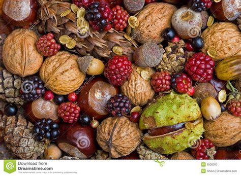 d fruit fruits d automne photo stock image 6500050