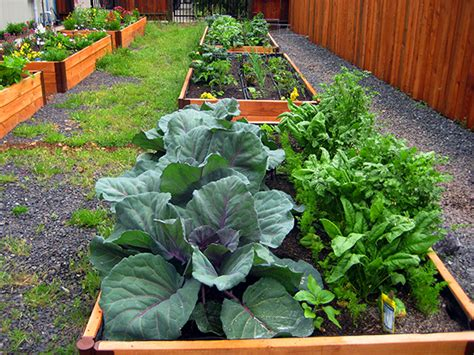 Southern California Vegetable Gardening Agromin About Company