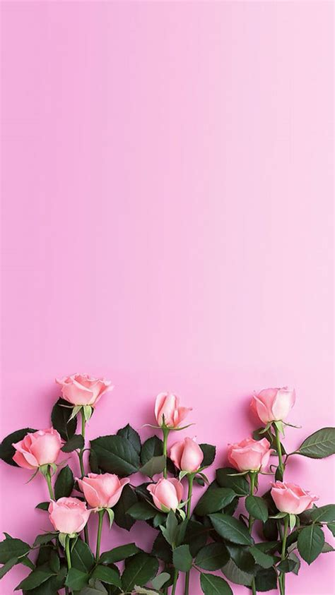 Pink Better Me For Iphone 55s66s 1000 images about flowers on wallpapers