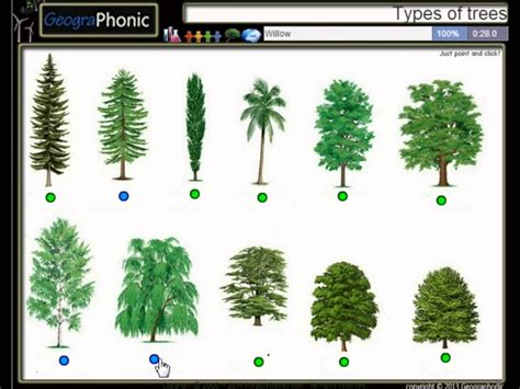 type of tree types of trees monstermathclub