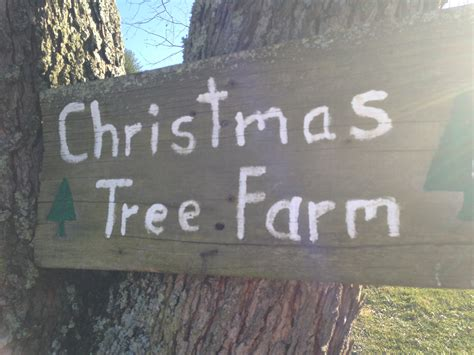 point pleasant christmas tree farm nc finding family adventures