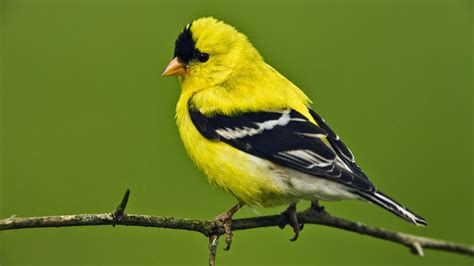 different color birds s hd wallpapers photos 2014 top 3