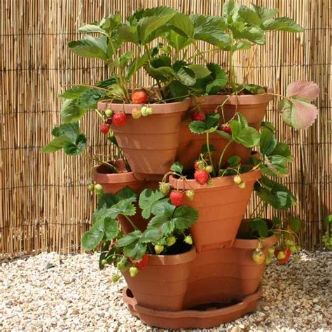customer reviews for botanico 3tiered strawberry planter