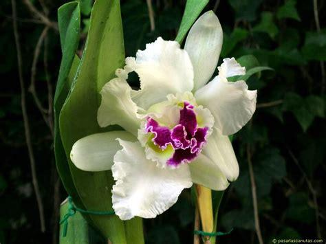 imagenes de orquideas muy bonitas flora y fauna imbabura