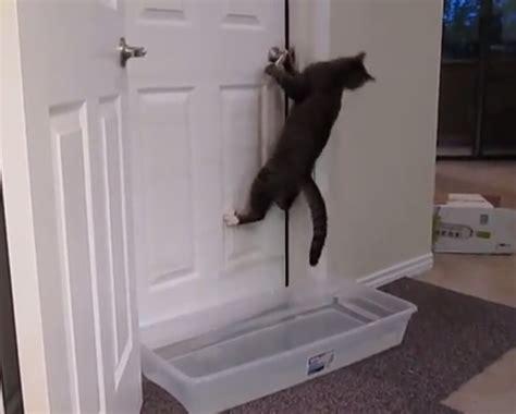 lock cat in bathroom astrum hangouts week 2 the cat s meow ttploreplaycentral
