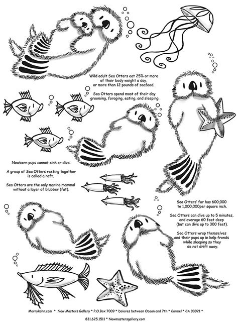 the stylish sea otter coloring page pertaining to inspire