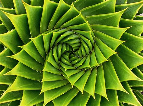 flower of life pattern in nature amazing plants 2 a gallery on flickr