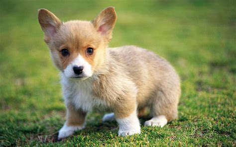Adorable Pets by Puppies Puppies Wallpaper 22040876 Fanpop