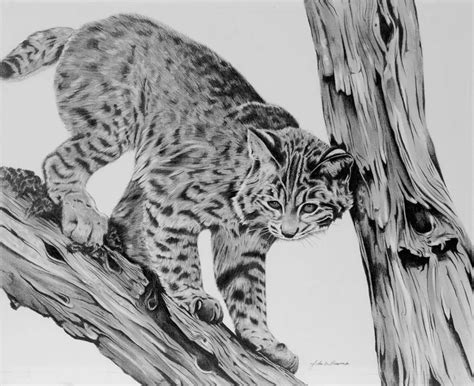 Lead Like A Tour Leader Limited bobcat drawing by bowman
