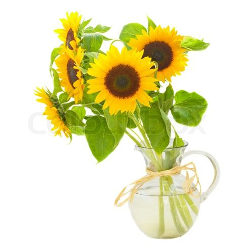 Sunflowers In A Vase by Sunflowers In Vase Stock Photo Colourbox
