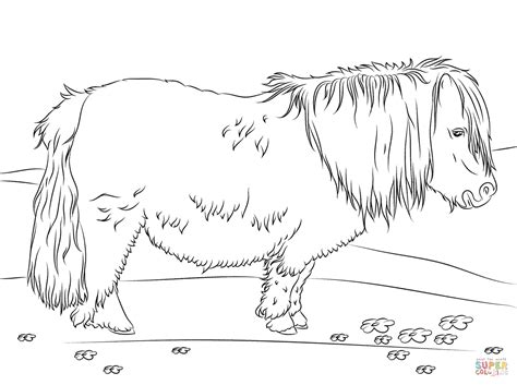 Coloring Page Pony by Shetland Pony Coloring Page Free Printable Coloring