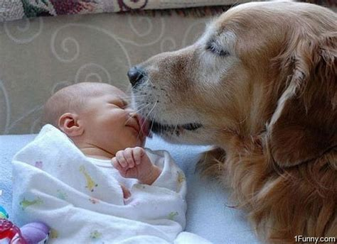 dogs babies baby 1funny