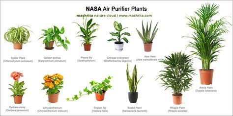 best houseplants for clean air nasa air purifying house plants air purifiers