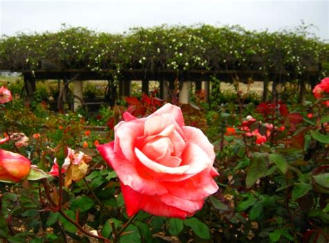 Stop To Smell The Roses In San Diego S Balboa Park San Diego Flower Garden